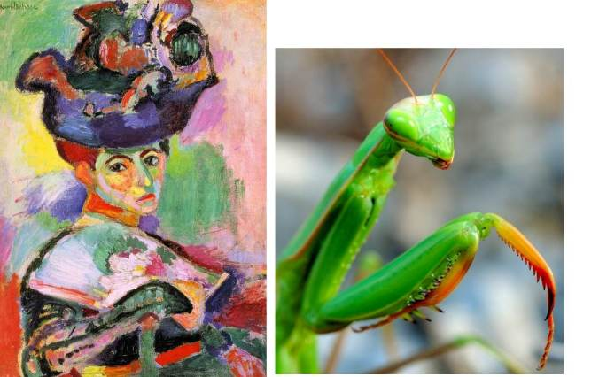 Matisse-femme au chapeau-analogie