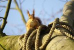 Passage protégé pour les écureuils